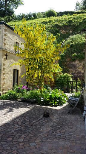 Bloeiende boom wilde tuin Valkenburg