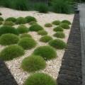 Voortuin van yellow sun split en grassen