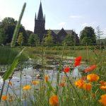 aanleg vijver landelijke tuin