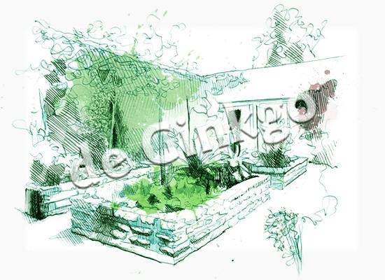 tuinontwerp-tekening-ginkgo
