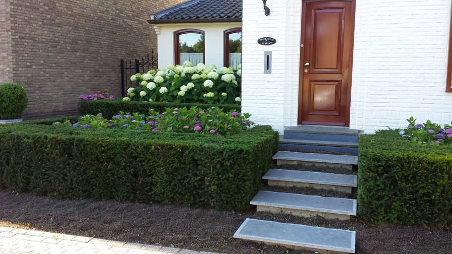 Voortuin taxus haag met hortensias beplanting